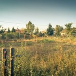 Porządki na działce budowlanej – karczowanie terenu